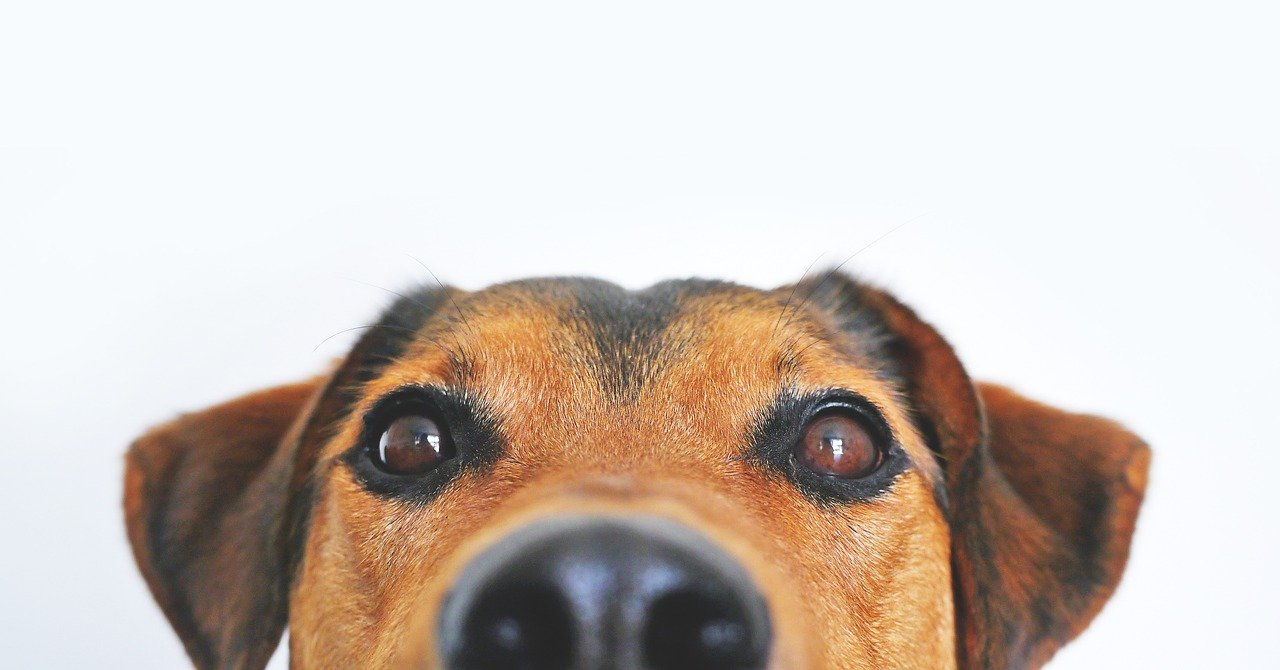 therapy help for dog phobia and fear